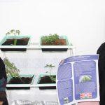 طلاب الجامعة الأمريكية في رأس الخيمة يطبقون الزراعة العمودية بشكل ناجح